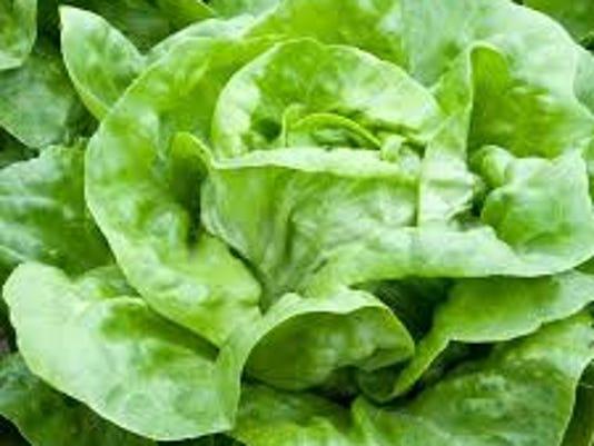 buttercrunch-lettuce.jpg