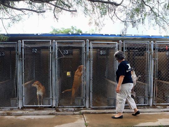 Volunteer Kimberly Rezk walks past kennels Thursday,