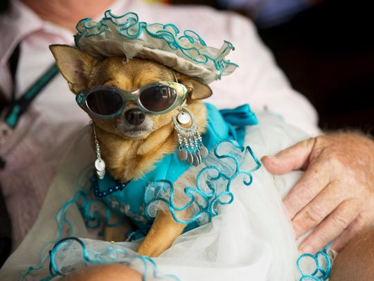 There's a Pet's Halloween Party 1 to 6 p.m. Oct. 29