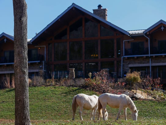Two wild horses graze on grass behind the lodge at