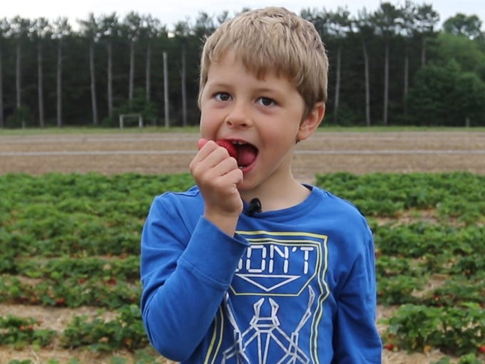 Finn Dickman, 6, eats a strawberry on Wednesday, June