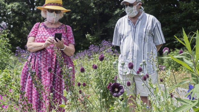 WORCESTER- Ellen and Chris Pile take pictures of flowers at the Tower Hill Botanic Gardens after Massachusetts opens museums as part of level 3 of reopening plan on July 7, 2020.