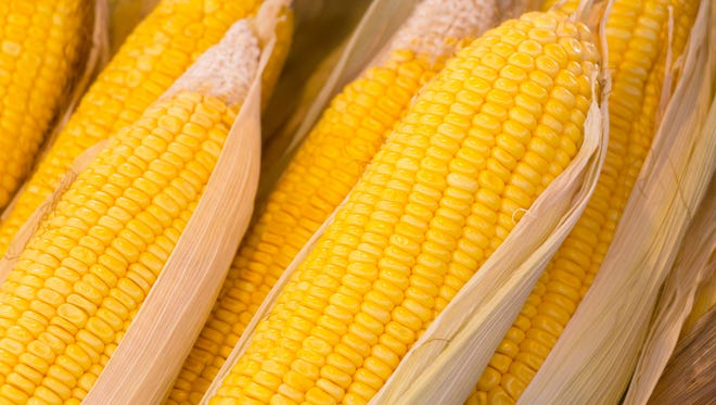 Row of boiled corn in close-up; one of healthy street food in Thailand.