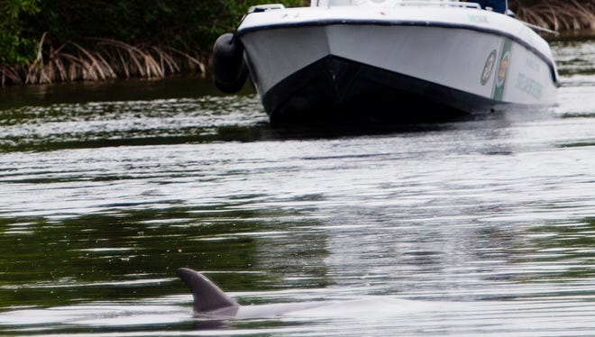 Members of the Florida Fish and Wildlife Conservation Commission and other local law enforcement officials try to coax a dolphin through the Chiquita Lock in Cape Coral on Friday. The dolphin has been seen in a canal since early April.