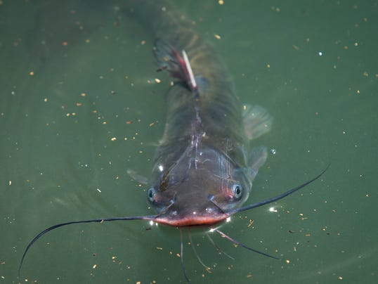Phoenix to spend 200 000 to stock fish at 7 parks for Arkansas game and fish license