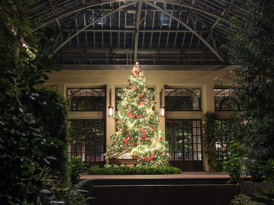 Guests to the Longwood Gardens conservatory will be greeted by a gilded grand piano with lights growing out of it up a 22-foot Concolor Fir.