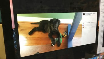 Search for lost Kennett Township puppy that fell in creek aided by Facebook
