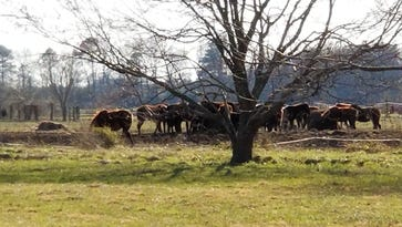 'Shocking, horrendous,' sheriff says as dozens of dead horses found on rural property