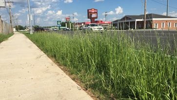 2 questions about the same grass: How did city get it to grow so well? When will city mow it?