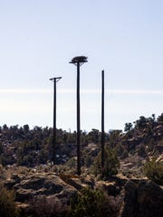 An osprey platform with a nest is pictured on Thursday near the Texas Hole fishing grounds at Navajo Dam.