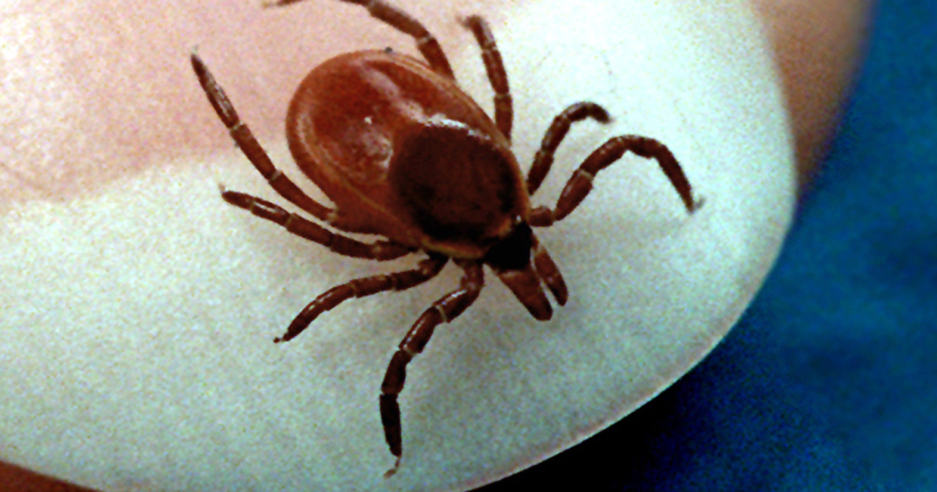 Tick season resumes in Iowa, as Lyme disease threat surges