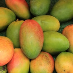 Ask The Pharmacist: Mangoes are magnificent, unless you're allergic