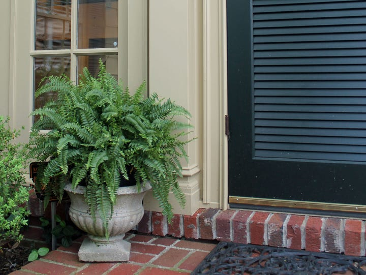Small touches, such as this container of ferns placed