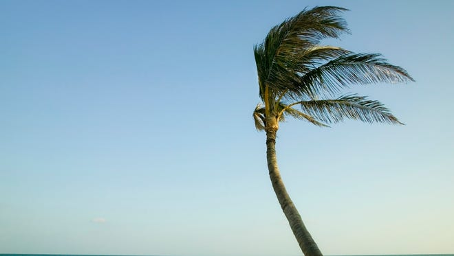Palms are built differently than hard woods.