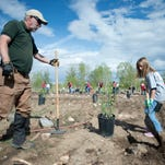 Master Naturalist volunteer John Atkinson, left, helps Kayden Tafoya, 10, dig a hole at the Anheuser-Busch brewery's 10th annual tree-planting event at McMurry Natural Area in Fort Collins Thursday, May 15, 2014. The Master Naturalist training program includes 60 hours of training on basic ecology about local natural areas, teaching techniques and more. Master Naturalists are asked to contribute 50 hours of volunteer service within two years of completing training.