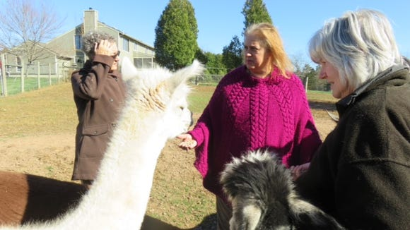 Lynne snapped this photo of her friend Kathy and me feeding alpacas with Pat.