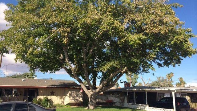 Desert Sage columnist wonders if the hated mulberry tree could help solve a political impasse.