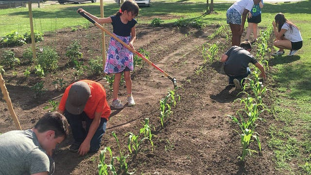 Kids are learning all about gardening this summer beginning with weeding. Children include: Rocky Thomas, Korbin Kelley, Junior Thomas, Olivia Barnes, Jaiden Hill, Jasmine Mundy and Makiah Anthony. KRIS DUDLEY/EXAMINER-ENTERPRISE