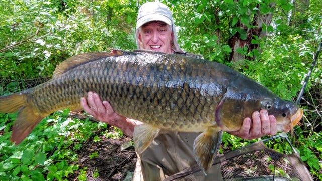 Dave Pickering holds the 40-pound carp he caught in a Rhode Island pond.
