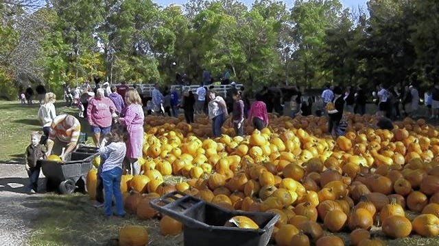 Customers check out a pile of pumpkins last year at Freeman's Farm, 6142 Lewis Center Road in Genoa Township. The farm will hold many of its traditional fall activities this year but with new standards in place to protect visitors from the COVID-19 coronavirus.