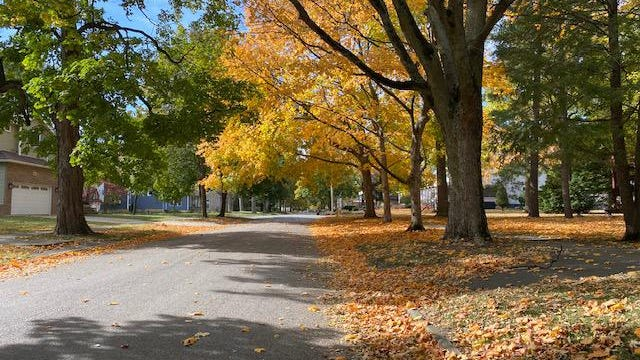 In the 500 block of College Avenue the colors are reflecting the seasonal change.