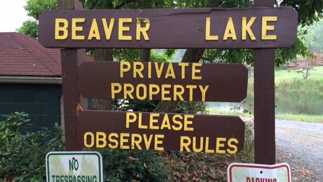 Hydrilla, an invasive water weed, has taken root in Beaver Lake.