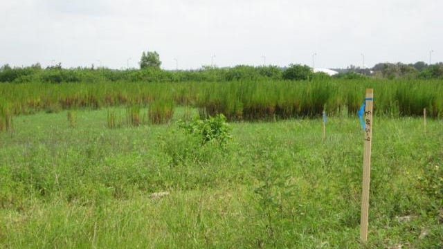 Many townspeople have suggested a 67-acre parcel of land located off Imperial Parkway. The $12-million property has utilities and is currently permitted for 303 residential unites, according to the Lee County Property Appraiser's website.
