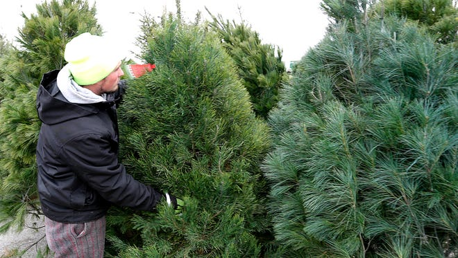 Worker Dylan Giencke places a scotch pine next to a white pine on the Pump N Pantry lot in 2015.