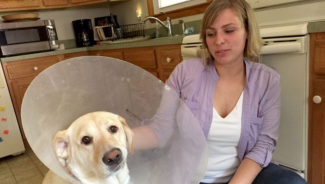 Meghan Shue with her family's lab, Sara. Sara needs surgery on a tumor on her back and the Shues are trying to raise money to pay for it.