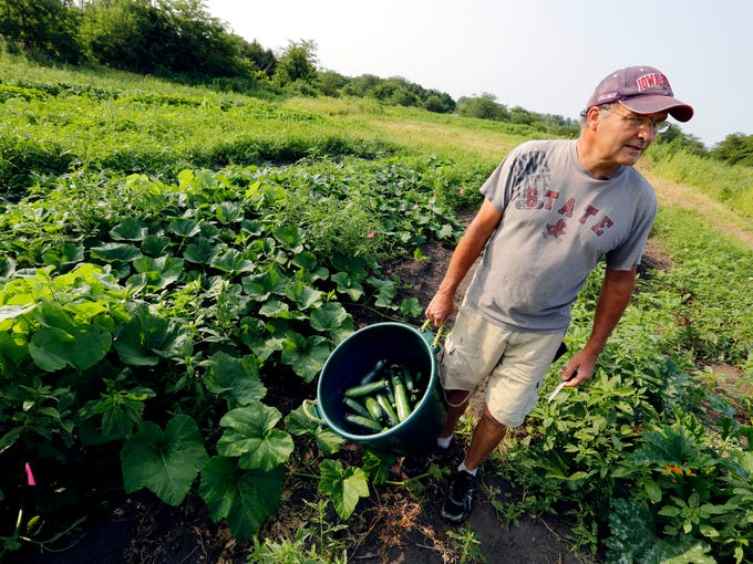 Denny Wimmer, 58, carries a bin of freshly-harvested zucchini on his organic farm in Arispe on July 31, 2014.    Denny left his sales career in Chicago three years ago to return and launch an organic operation on the family's 76 acres of land.