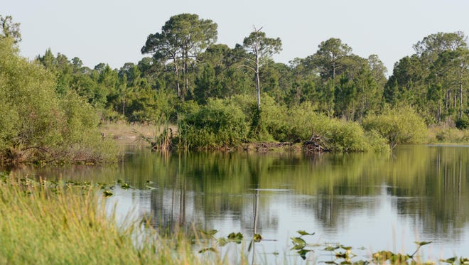 A free guided hike is being offered on Saturday at Pop Ash Creek Preserve in North Fort Myers.