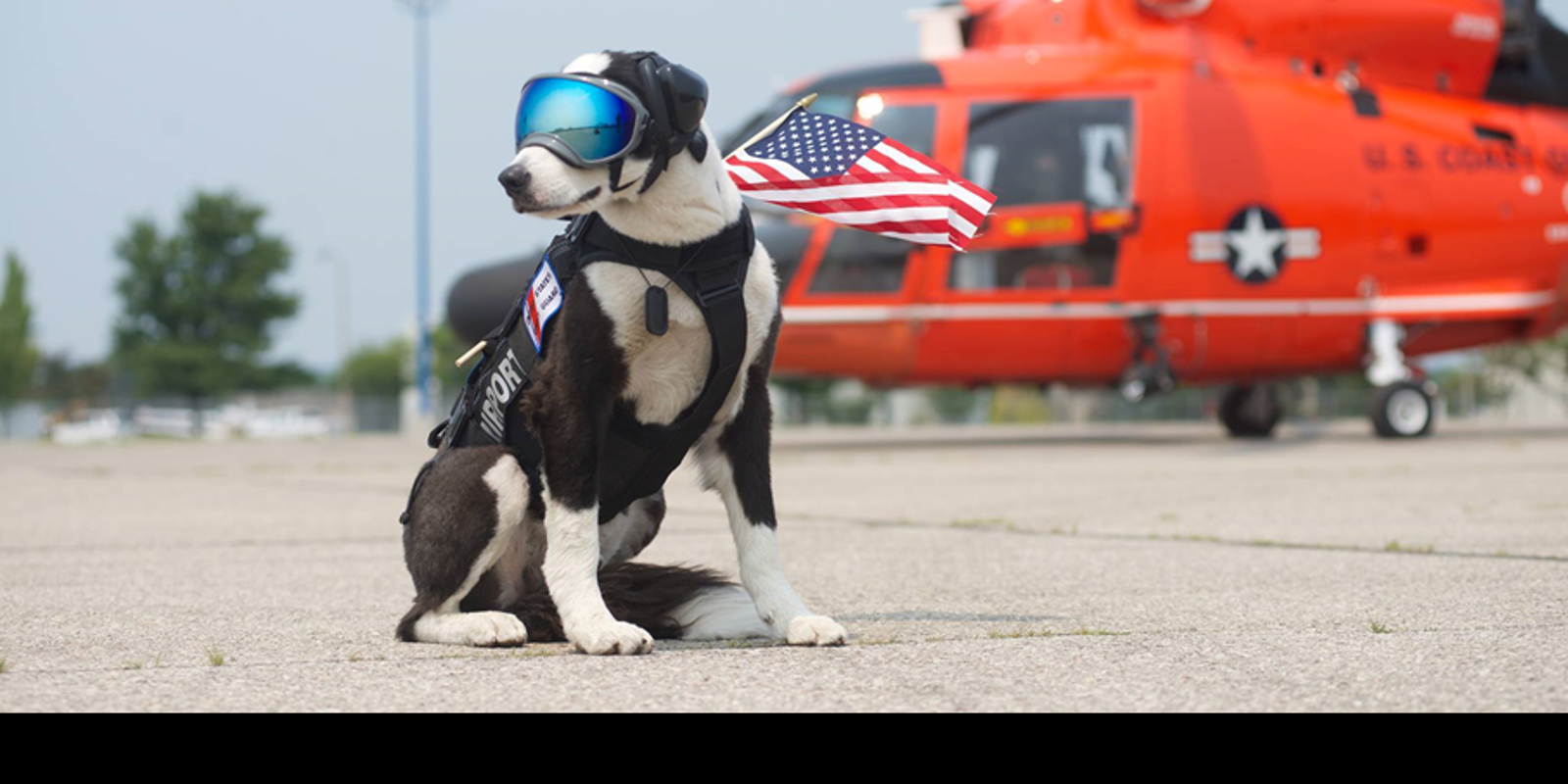 Famed Traverse City airport dog, Piper, dies of cancer