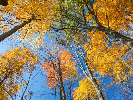Trees blaze with color in the Hudson Valley