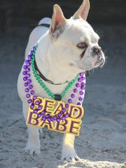 The eighth annual Barefoot Mardi Gras on Padre Island will be this Saturday.