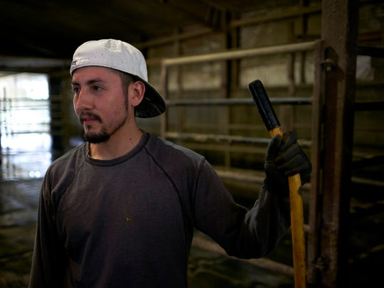 Because the dairy farm where he works is facing a labor shortage, Manuel Estrada said he hasn't had a real day off in about a month.