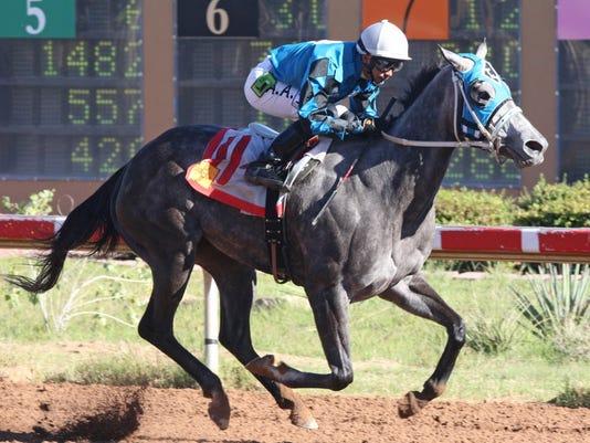 FMN Horses 0827