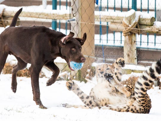 Moose steals Donni's ball as they play together in