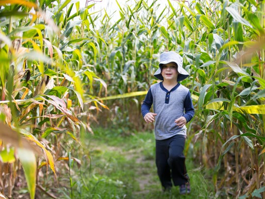 Ben Combs of Palmyra runs through the corn maze at Wickham Farms in Penfield on Friday, Sept. 25, 2015.