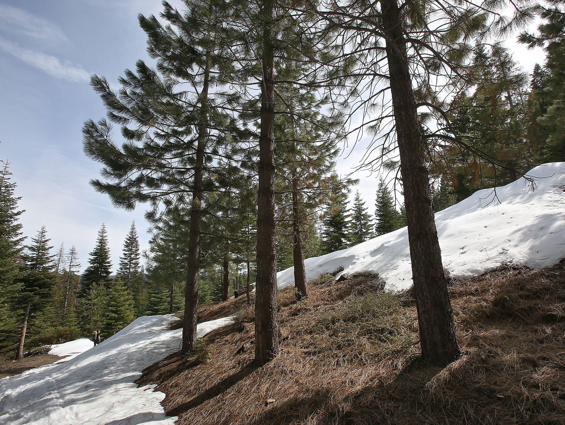Measurements taken across the Sierra Nevada showed