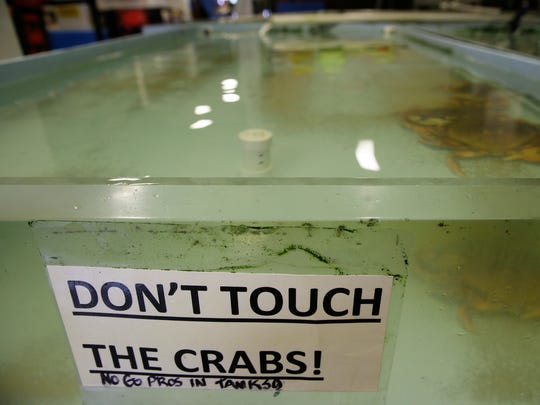 A tank normally filled with Dungeness crab at the Alioto-Lazio