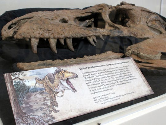 "The skull of a tyrannosaur nicknamed the ""Bisti Beast"" is on display at the New Mexico Museum of Natural History and Science in Albuquerque, N.M., on Tuesday, Aug. 15, 2017. Museum curator of paleontology Thomas Williamson discovered the fossil in 1996 and worked with researchers at Los Alamos National Laboratory last fall to scan the skull in hopes of gleaning new information about the evolution of the massive, bone-crushing dinosaurs."