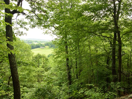 There's a small view through the trees overlooking a farm about 15 minutes into the hike  up Hosner Mountain.