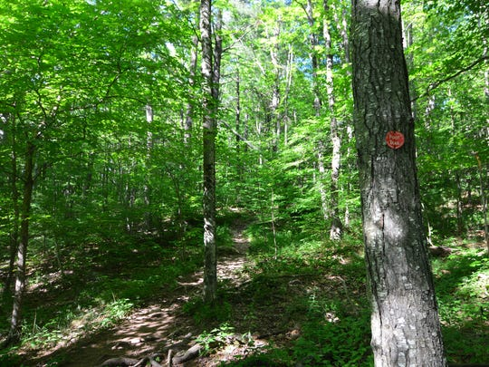 Follow the red trail markers on a long arduous journey up to the tower on Mount Tremper.