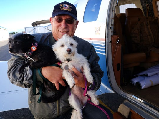 Yahuda Netanel carries two rescue dogs prior to a flight Wednesday out of the Van Nuys (Calif.) Airport. Netanel, founder and president of Wings of Rescue, started as the lone pilot who rescued 300 dogs, and the group expects to fly 7,000 pets in 2015.