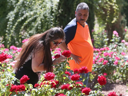 Martha Villagrana smells large roses while touring the Municipal Rose Garden with boyfriend Mario Nuñez on Saturday at 1702 N. Copia St.