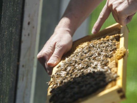 636165541258045347-bees.jpg