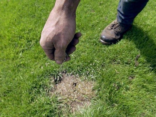 636195549285628470-SALBrd-10-05-2012-RealLiving-1-E003--2012-10-04-IMG-SAL1005-RL-dry-grass-1-1-0L2E238P-IMG-SAL1005-RL-dry-grass-1-1-0L2E238P.jpg