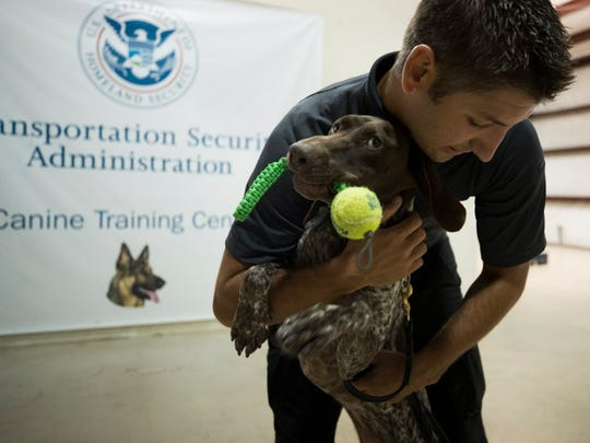 Ryan Berg of San Diego Transit Enforcement congratulates Aska, a German short-haired pointer, with a hug and a chew toy after the dog found an explosive in a roller bag during training at the Transportation Security Administration's National Canine Training Center in San Antonio on Sept. 13, 2017.