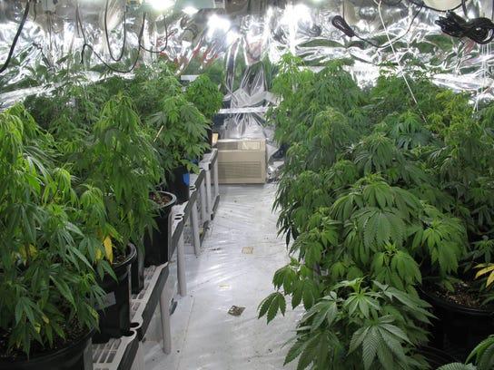 -Marijuana 3 for online.jpg_20121129.jpg