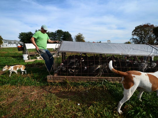 Homer Walden moves a pasture pen at Sunnyside Farm in Newberry Township. By moving the pens, he provides livestock with fresh grass every day.